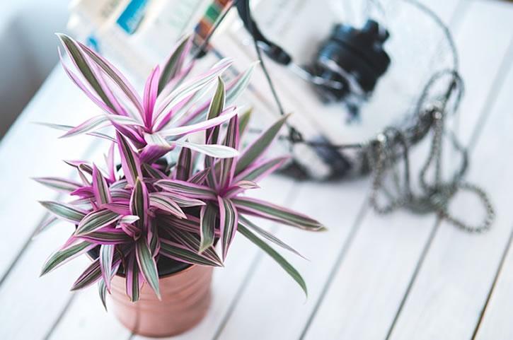 plantas y flores trabajo